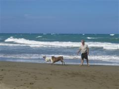 Playing fetch on the beach