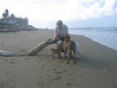 Muerte, Vida + Mr T on beachwalk