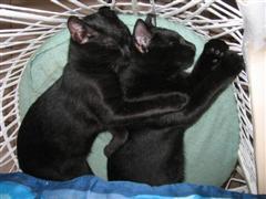 Noche + Midnight cuddle