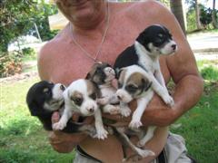 Vida Puppy love armful