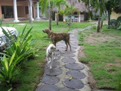 Dog running mates