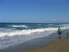 watching kite boarding on beachwalk with dogs
